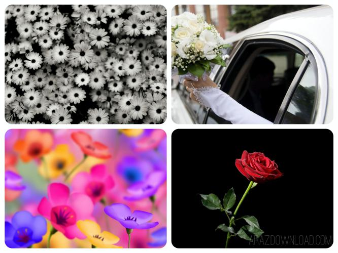 Flowers-Wallpaper-Arazdownload1.jpg - 55.4 kb