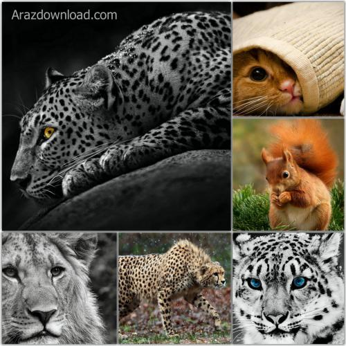 Arazdownload-animal-wallpapers