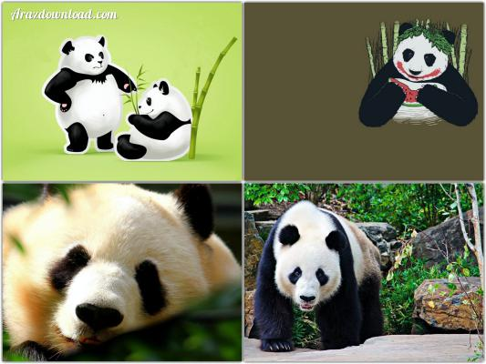Arazdownload-Panda-Wallpaper-2.jpg - 38.6 kb